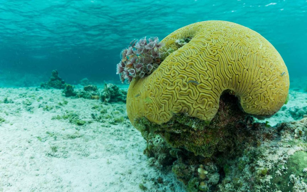 Coral devastation in the Pacific & Indian Oceans – Coral Triangle Day