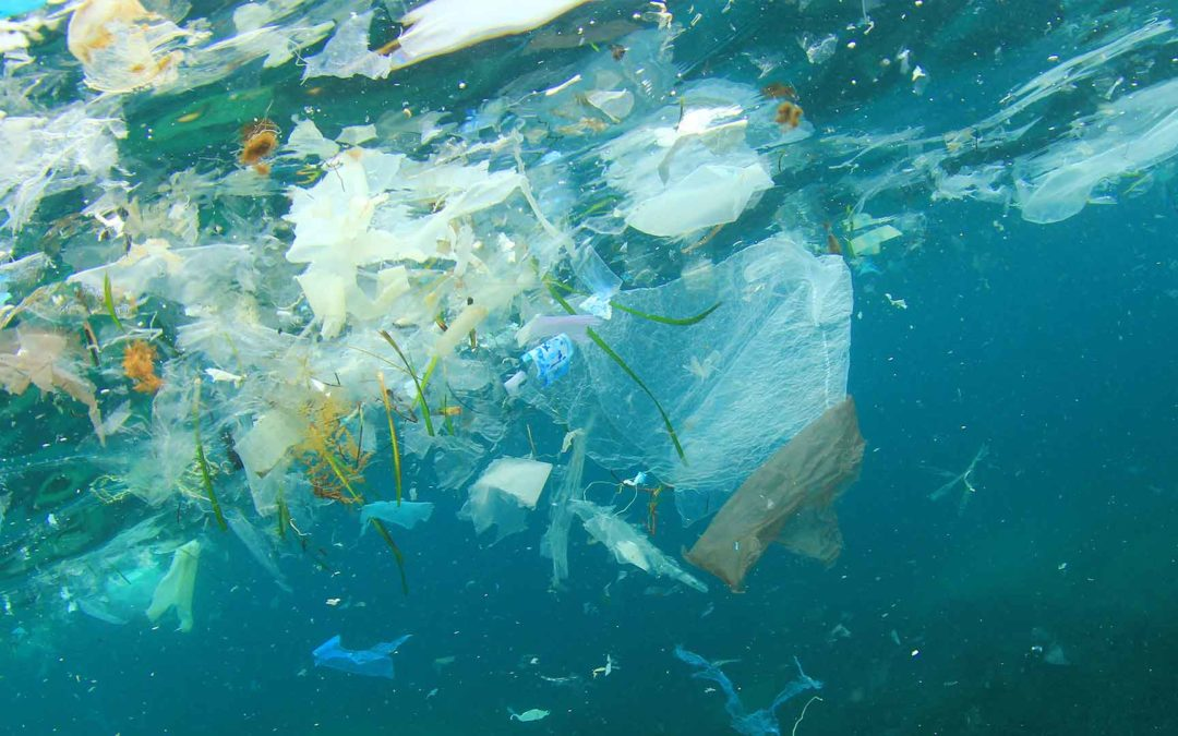 Reducing plastic pollution in our oceans – World Environment Day