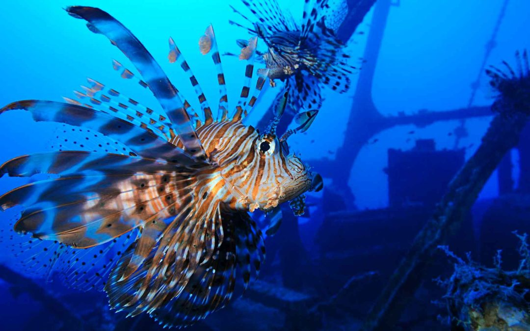 Invasive species in the Atlantic & Mediterranean – World Oceans Day