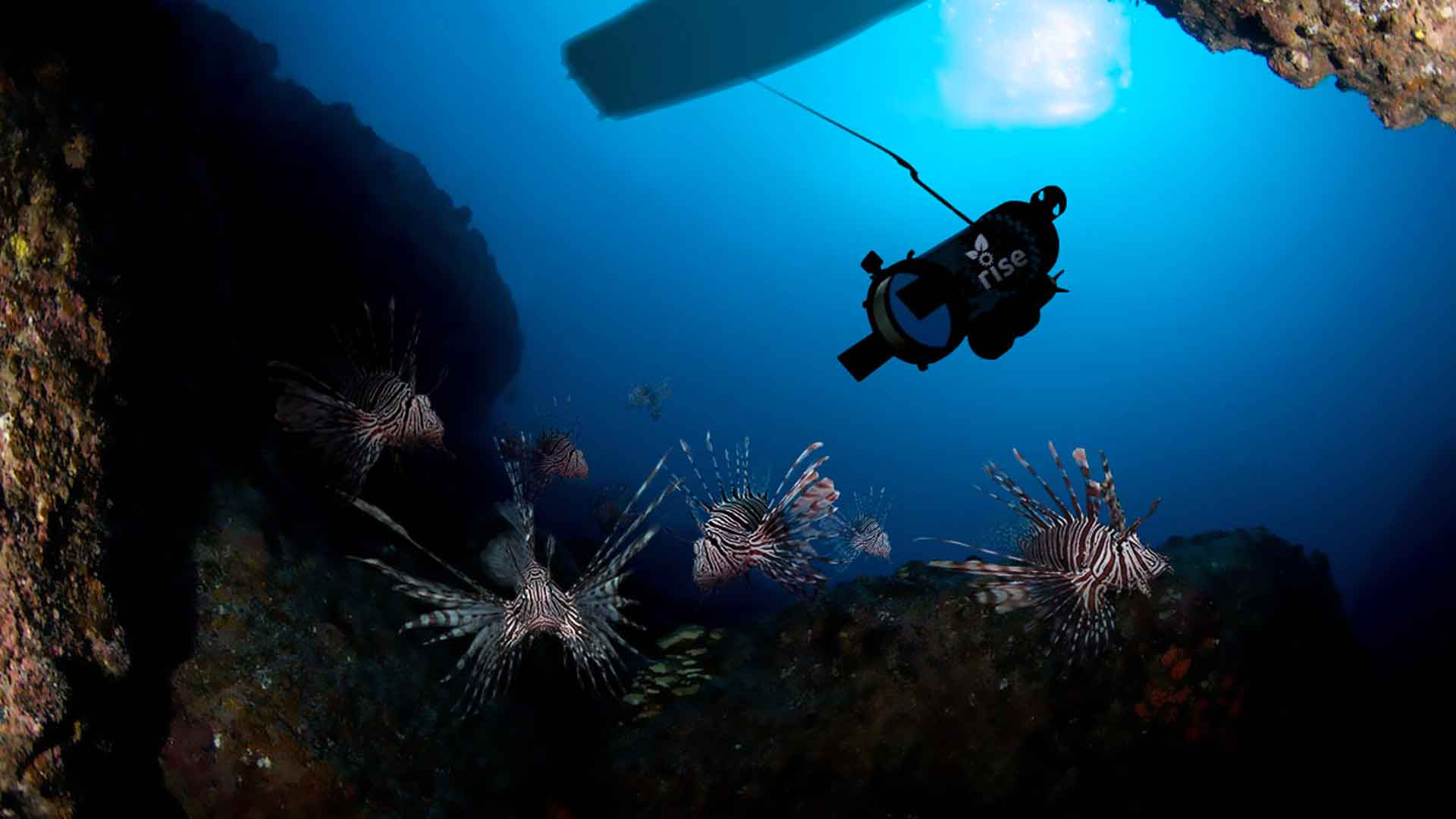 Rise robot collecting lionfish